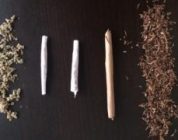 Would You Rather Have Joints, Blunt Or Spliff?